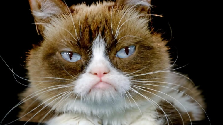 Cuddly Kitty Or Killer Evolution Explains Why Cats Are Grumpy