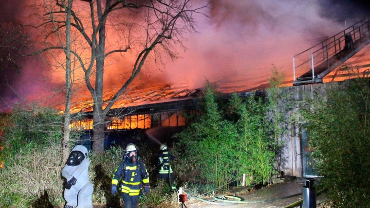 German Zoo Fire Kills Over 30 Animals Including Apes