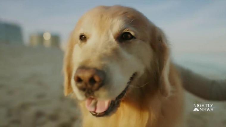 A very good boy': Cancer survivor dog