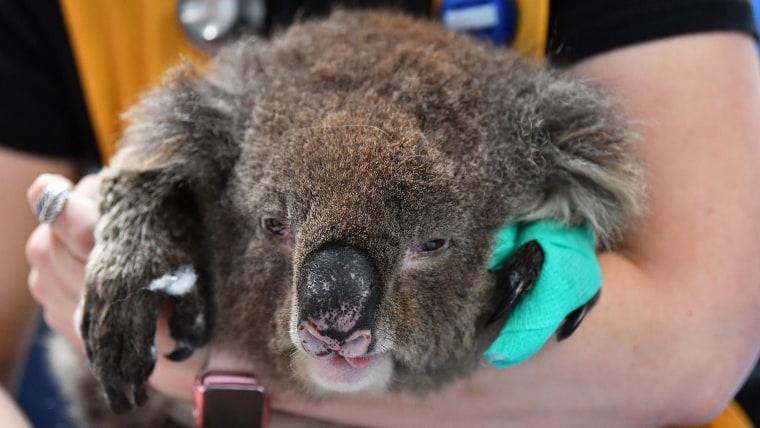 Serena Williams' Australian Open manicure features koala to honor wildfire relief