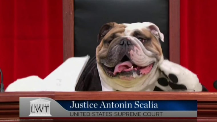 The Supreme Court Of Cute Dogs