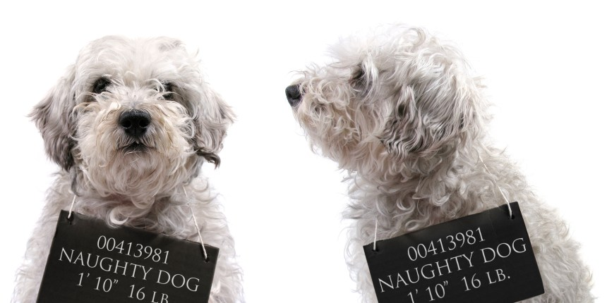 What Your Dog's Bad Behavior Says About You