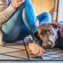 Woman sitting on the floor with her dog, on their blue rug. The best washable rugs of 2021 shared by experts include area rugs, runner rugs, cotton rugs and more for the kitchen, bathroom and other home spaces.