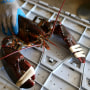 Una gran langosta en Three Sons Lobster and Fish de Portland, Maine, el 21 de julio de 2012.