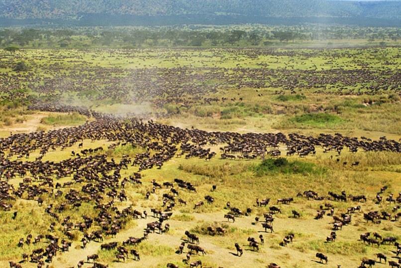 Image: Tanzania's Serengeti plain