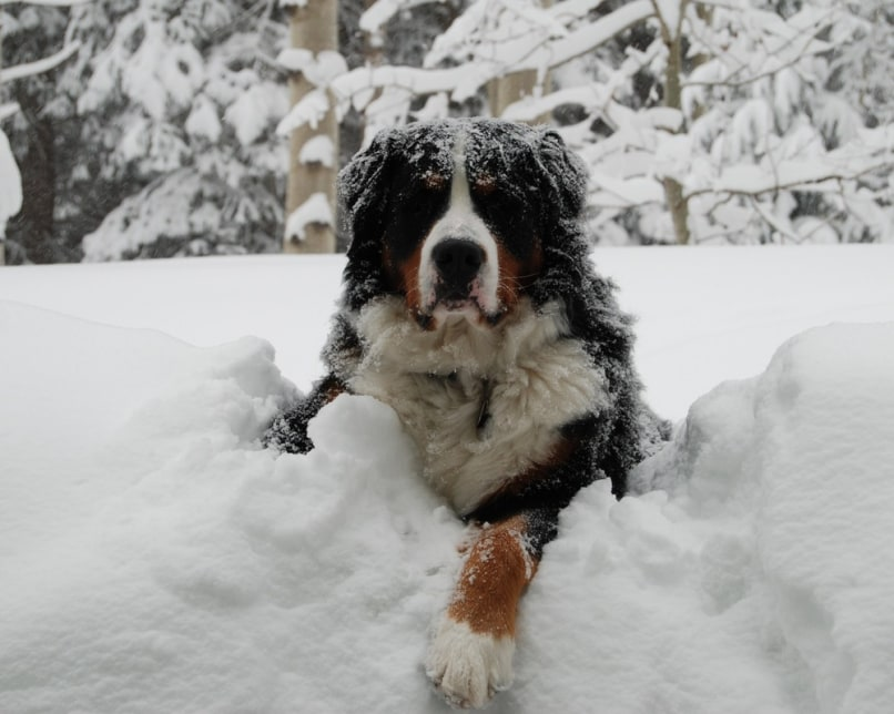 Image: Dog in snow