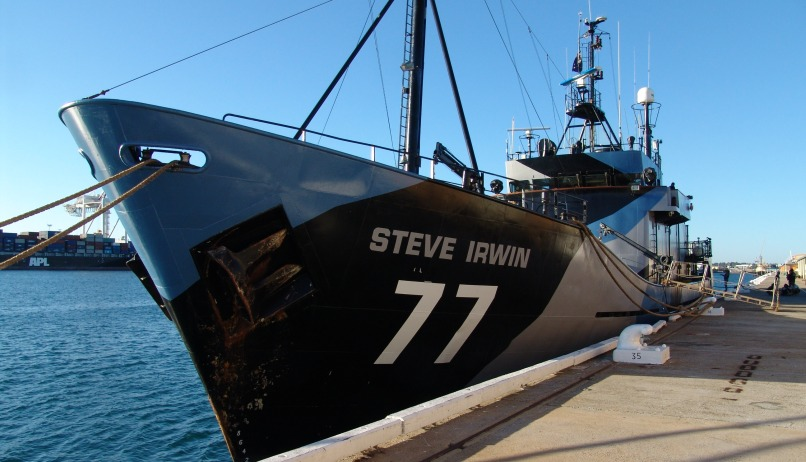 Image: Sea Shepherd ship in camo colors