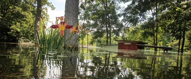 Image: Garden flowers on flooded property