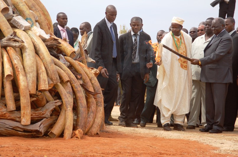 Image: Kenya president burns ivory