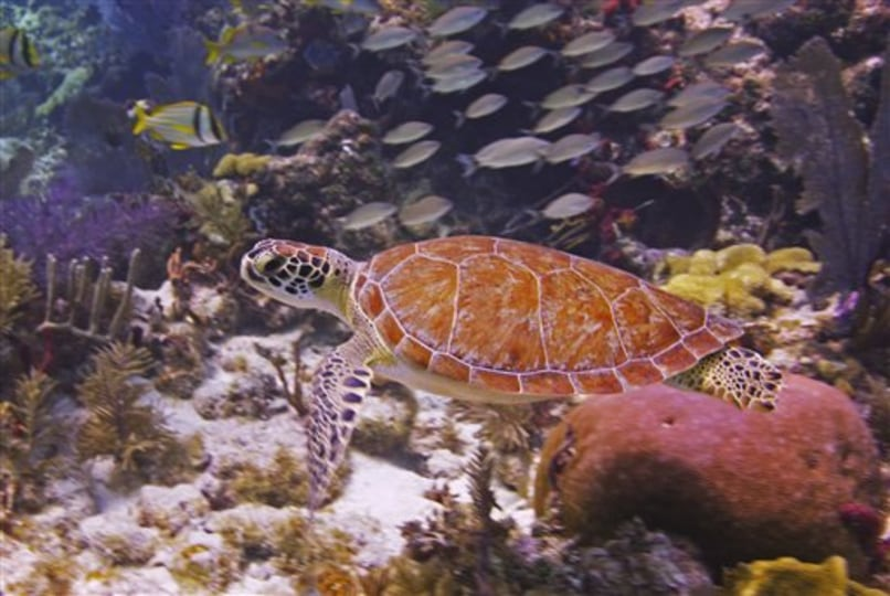 Image: sea turtle