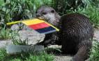Image: TOPSHOTS 