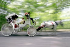 Image: Wedding carriage