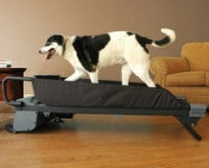 Image: Dog treadmill