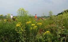 Image: Midewin National Tallgrass Prairie