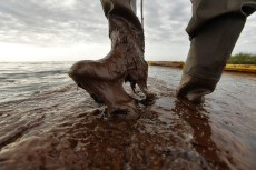 Image: Plaquemines Parish coastal zone director P.J. Hahn lifts his boot out of thick beached oil at Queen Bess Island.