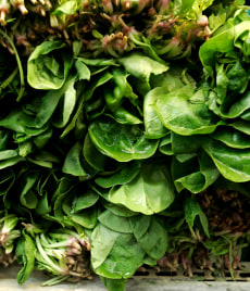 Image: Spinach
