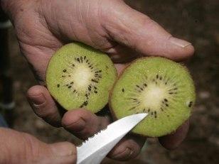 Image: Kiwi