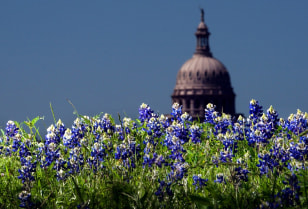 Image: the Capitol dome looms over a patch of bluebonnets in Austin, Texas