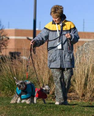 Image: A Humane Society volunteer walks two dogs given up for adoption