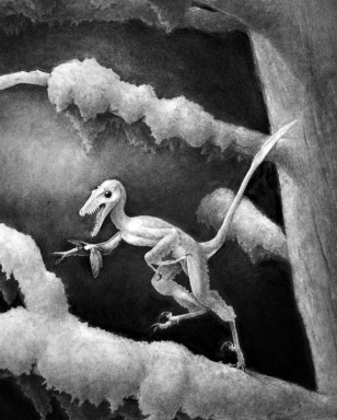 Image: Drawing of a Hesperonychus elizabethae