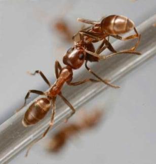 Image: Ant