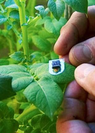 Image: Plant sensor