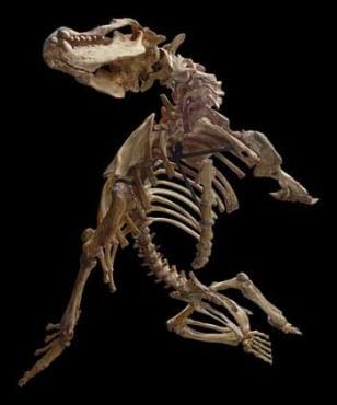 Image: Bones