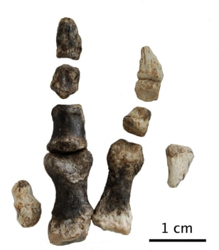 Image: Dinosaur fossil