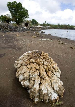 Image: Damaged coral