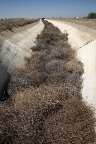 Image: Dried-up irrigation canal