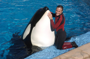 Image: Dawn Brancheau, whale trainer at SeaWorld Orlando, performs on Friday, December 30, 2005