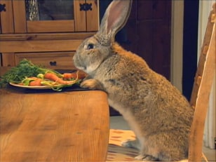 Image: Darius the bunny