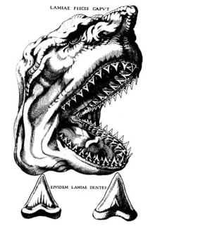 Image: Drawing of megalodon shark