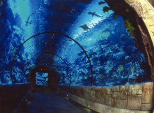 Image: Shark Reef at Mandalay