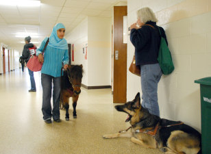 Image: Mona Ramouni and her guide horse Cali