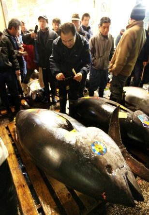 Image: A 342kg bluefin tuna