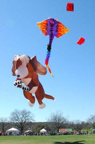 Image: kite