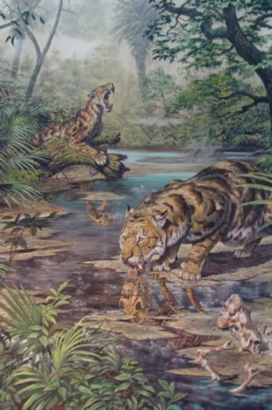 Image: Ancient saber-toothed cat Xenosmilis
