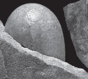 Image: Dinosaur egg