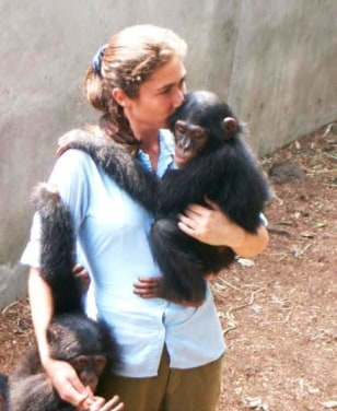 Image: Chimp-human contact