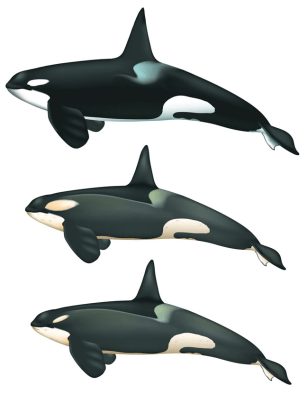 Image: Whales