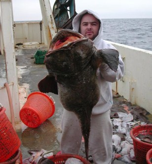 Image: Monkfish