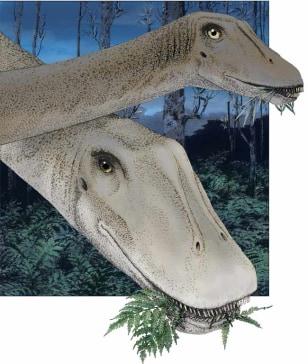 Image: Diplodocus illustration