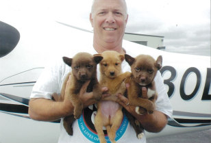 Image: Pilot Jeff Bennett with puppies