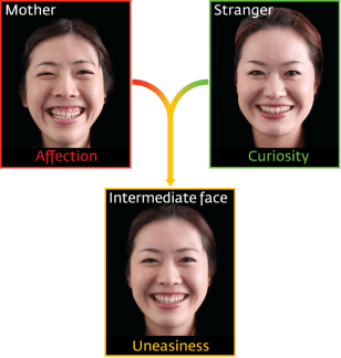 Image: Infants spend less time looking at a morphed image of the face of their mother than at one morphed with that of a stranger's face, possibly due to the 'uncanny valley' effect.