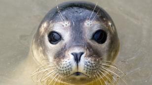 Image: GERMANY-ANIMALS-SEAL