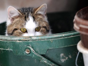 Image: Cat in a bucket