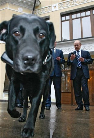 Image:Putin's Dog