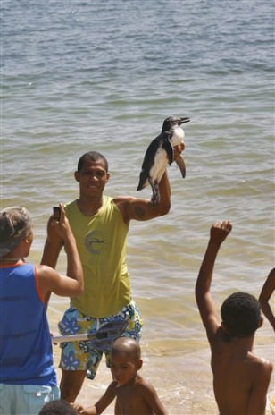 Image: Penguin on Salvador beach