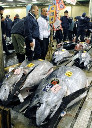 Image: Japan tuna
